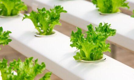 Lampy LED do uprawy roślin – nowoczesna technologia przyszłością w żywieniu?